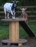 Anitas Goat Chicken Farm Html